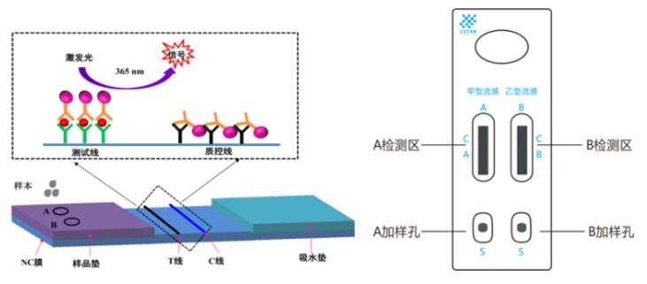 甲型/乙型流感病毒抗原检测试剂盒(荧光免疫层析法)